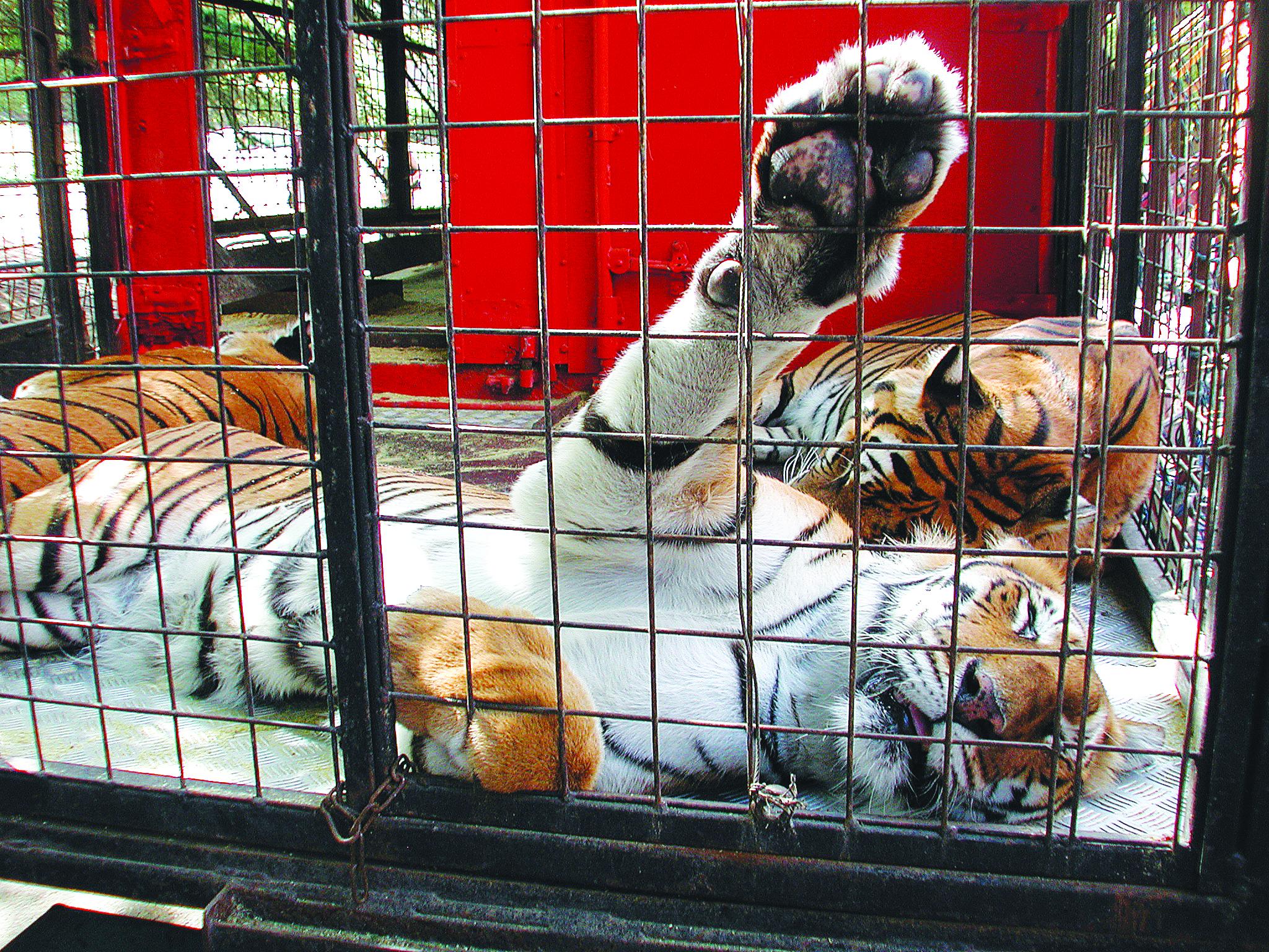 De moins en moins de cirques avec animaux sauvages en France