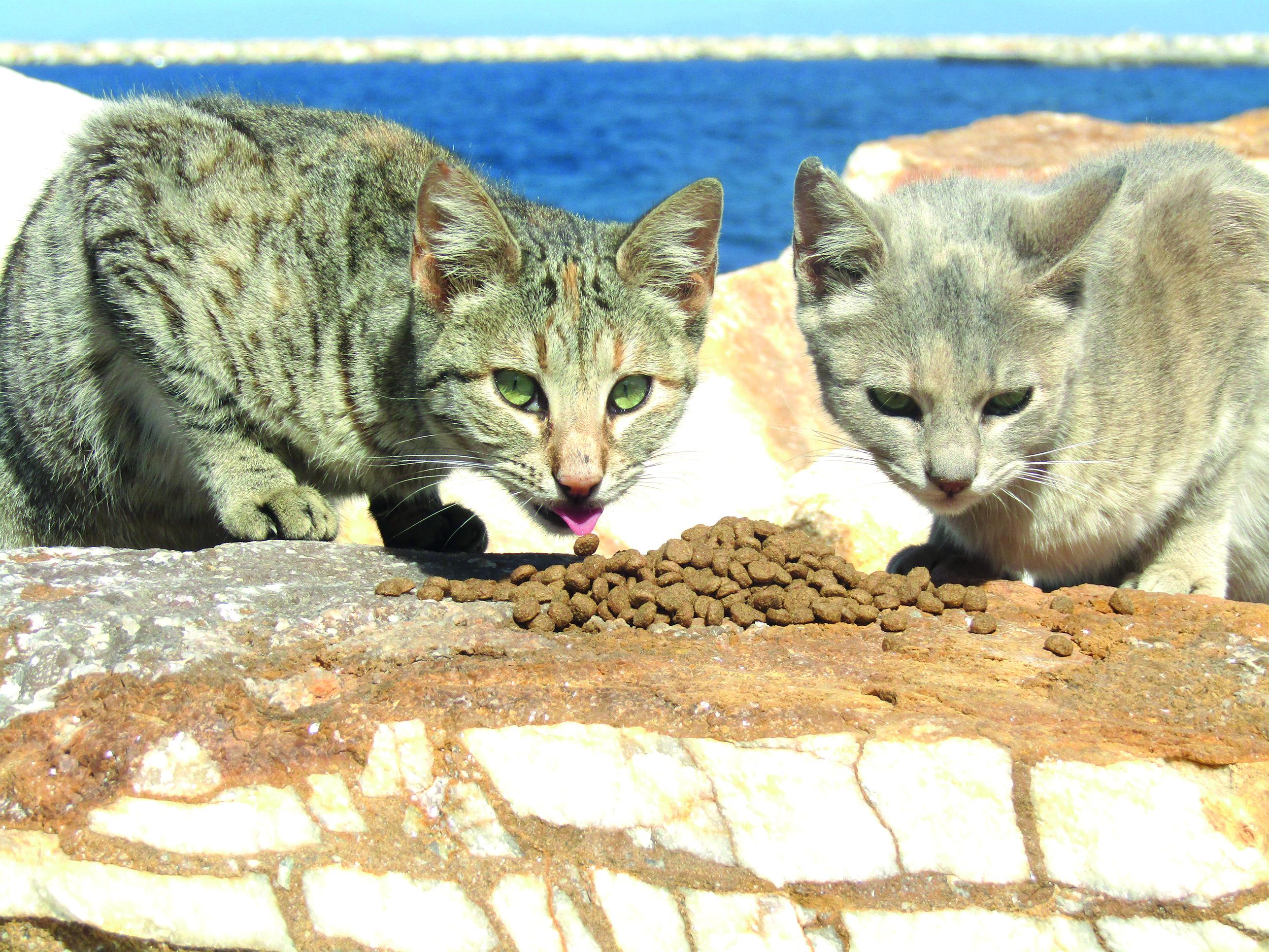 Avec les chats des îles grecques