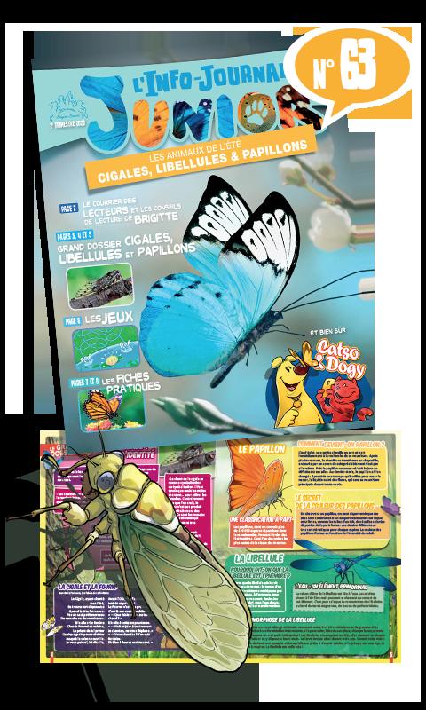 Cigales, libellules et papillons